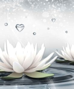 Fototapet med motivet: Vit Lotus droppar Hjärtas Vatten