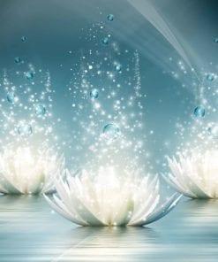 Fototapet med motivet: Vit Lotusblommor droppar