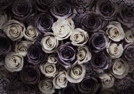 Fototapet med motivet: Vit grå rosor blommor
