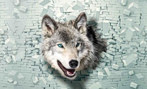 Fototapet med motivet: Wolf Djur