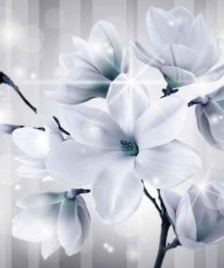 Fototapet med motivet: blommor Magnolia
