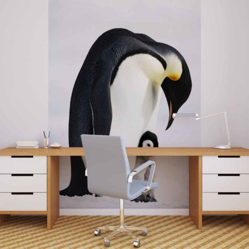 Fototapet med motivet: djur Pingvin