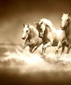 Fototapet med motivet: hästar