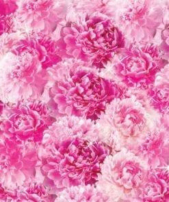 Fototapet med motivet: rosa blommor