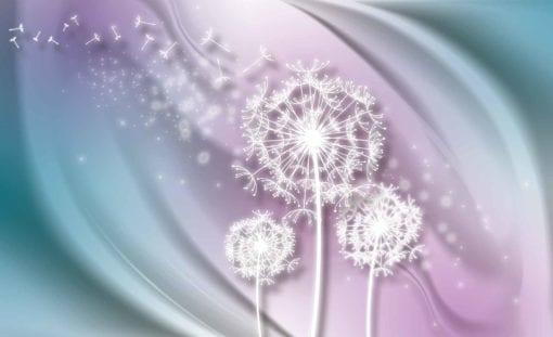 Fototapet med motivet: vit Dandelion